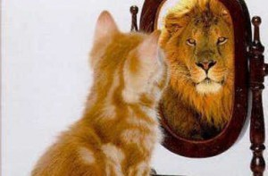 kitten-looking-in-mirror-seeing-a-lion_crop380w-300x197
